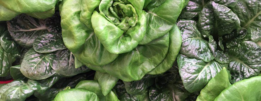 Local lettuce in winter in Ottawa